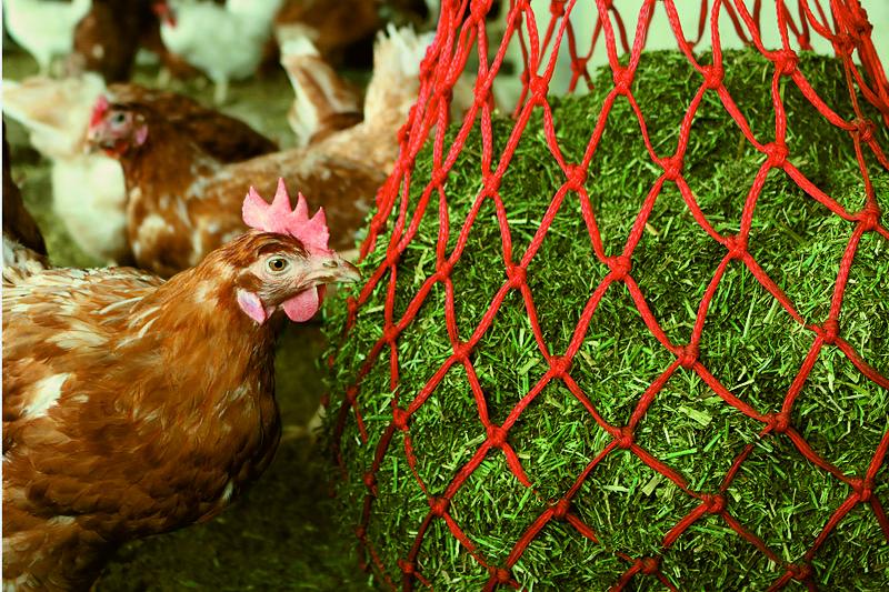 Luzerne-Material für die optimale Beschäftigung von Henne und Huhn in der Hühnermast