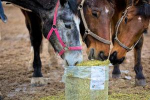Luzerne-Strukturmaterial für Ihr Pferd, gesund, eiweißreich mit wertvoller Rohfaser