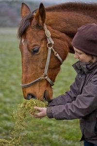 Rohfaser für Ihr Pferd, melasse- und getreidefrei